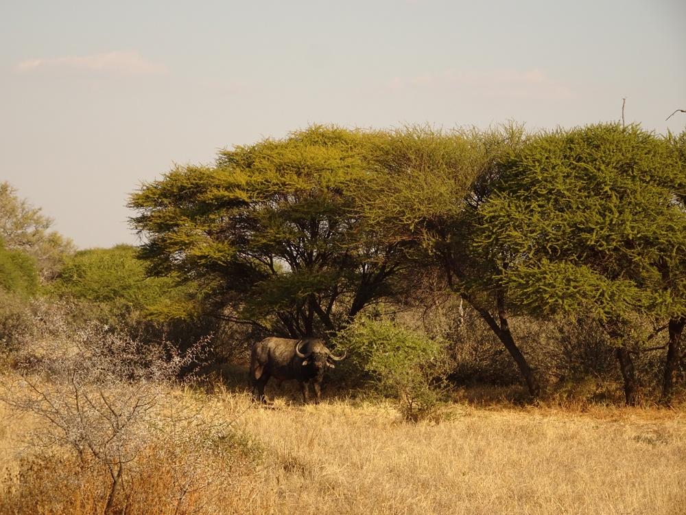 RR Weltweites Jagen - Asien & Afrika