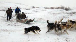Jagen in Grönland