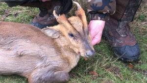 RR Weltweites Jagen   England
