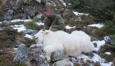 RR weltweites jagen   British Columbia