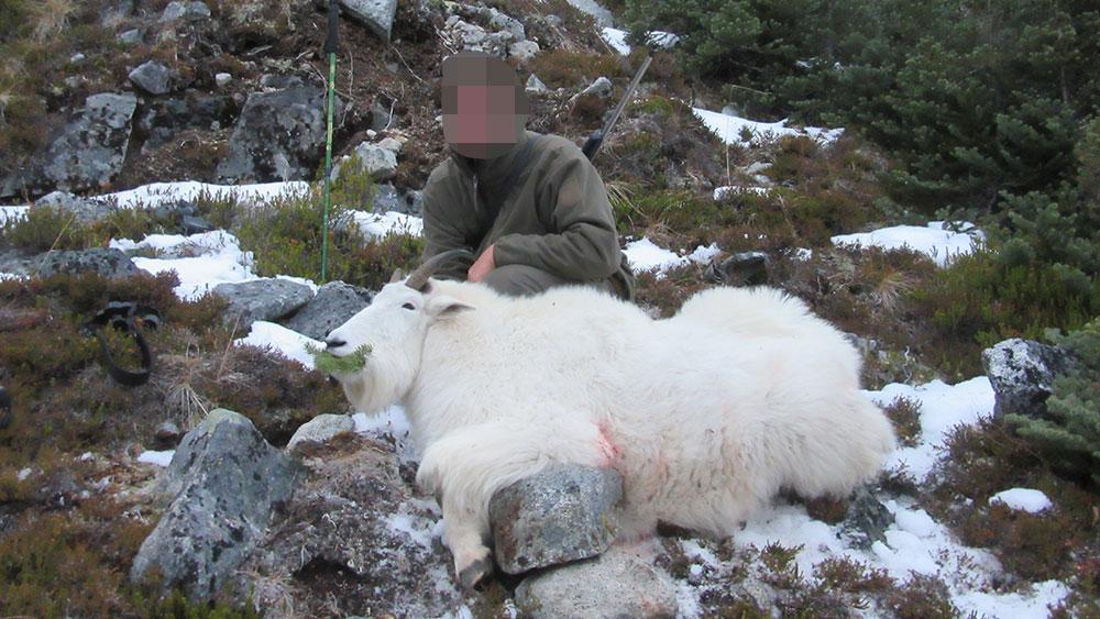 RR weltweites jagen | British Columbia