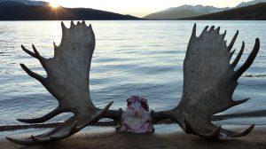 Jagen in British Columbia / Yukon