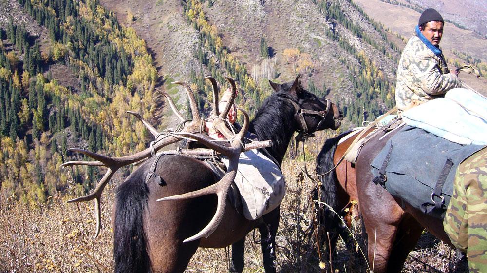 Jagen in Kasachstan