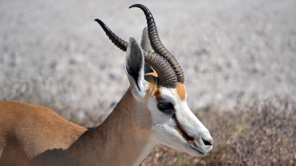 RR Weltweites Jagen | Namibia