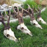 Jagen in Serbien