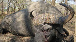 Jagen in Zimbabwe
