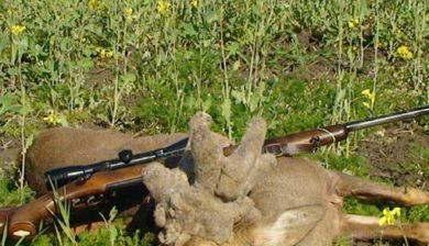 RR Weltweites Jagen   Perückenbock