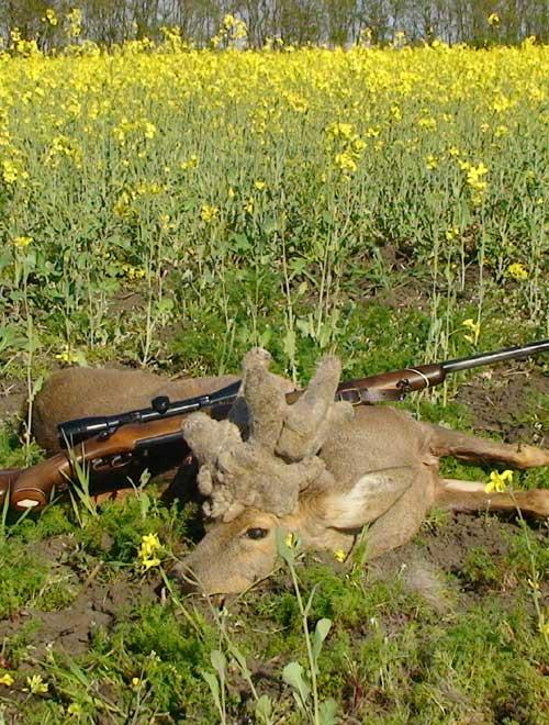 RR Weltweites Jagen | Perückenbock