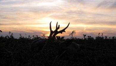 RR Weltweites Jagen   Bockjagd
