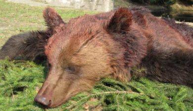 RR Weltweites Jagen   Bärenjagd