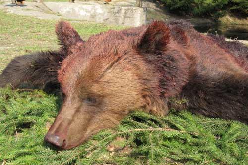 RR Weltweites Jagen | Bärenjagd