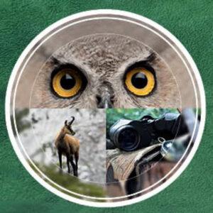 RR weltweites jagen - Hohe Jagd