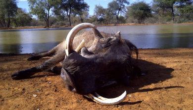 RR Weltweites Jagen | Südafrika