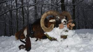 RR Weltweites Jagen | Tschechien