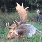 RR weltweites jagen | Damhirsch