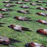 RR weltweites jagen | Flugwild