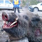RR weltweites jagen | Schwarzwild